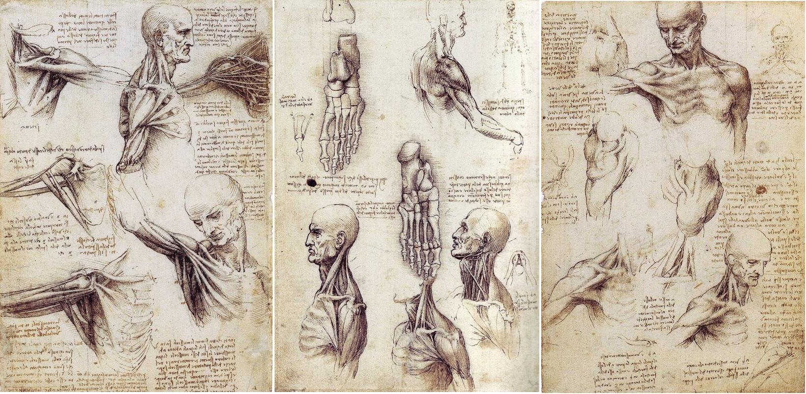 Анатомия по да Винчи